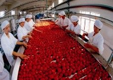 processing factory Halal Processing and Handling